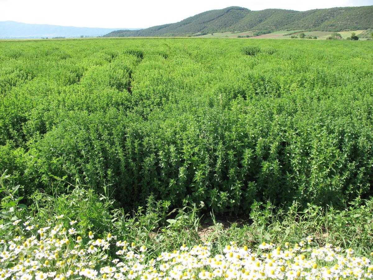Ήπειρος: Ξανά στη Βουλή το φαινόμενο της παράνομης αποψίλωσης αρωματικών-θεραπευτικών φυτών στα βουνά της Ηπείρου