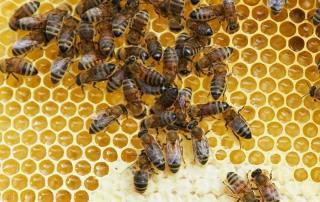 EU increases aid to Europe's beekeeping sector
