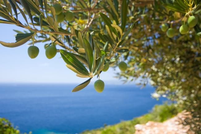 Window on Greek Olive Oil World Celebrates 3rd Anniversary