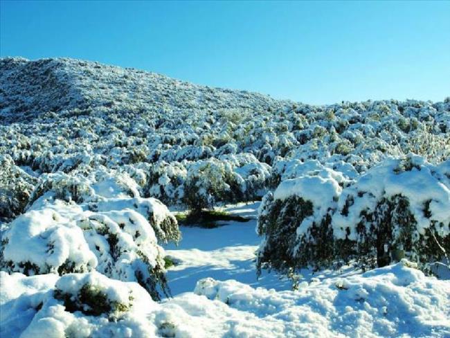 Αποτέλεσμα εικόνας για Υποβολή δηλώσεων ζημιάς από τη χιονόπτωση